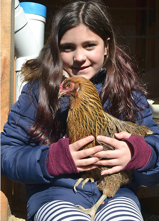 "<p>GAYLE WILSON PHOTO</p><p>Reegan McCarthy, a Grade 4 student at Petite Riviere Elementary, is regarded as one of the school's ""chicken whisperers.""</p>"