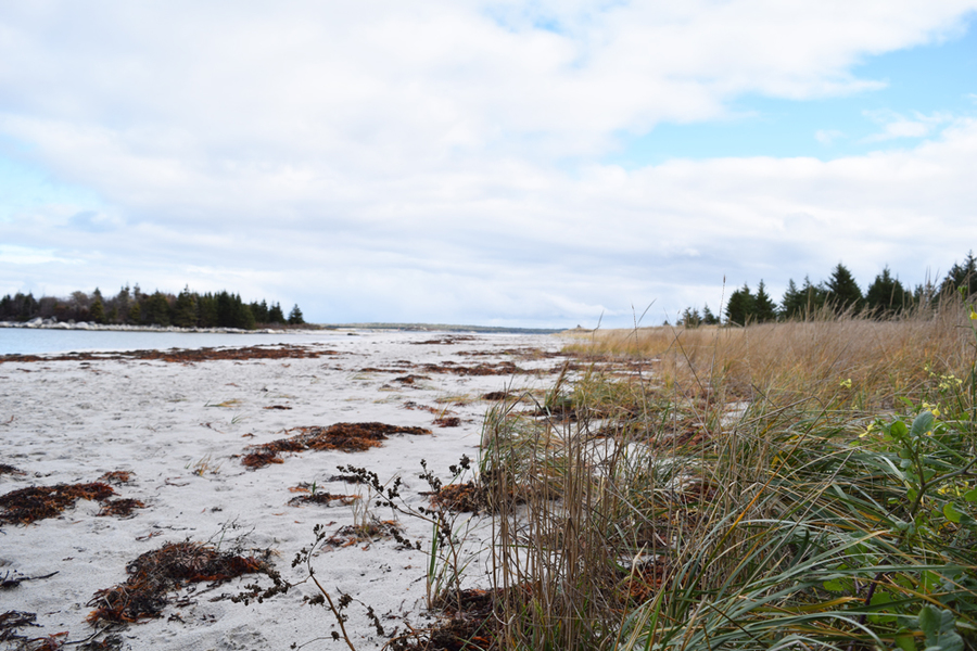 <p>MICHAEL LEE PHOTO</p><p>Despite being a popular tourist attraction, due in part to a more prominent online presence, Carter's Beach in Port Mouton has suffered this summer from increased vehicle traffic, garbage overflows and the unpleasant discovery of human waste.</p>