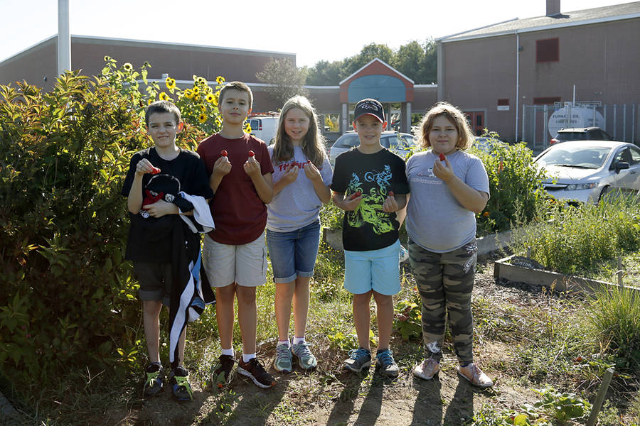 <p>BRITTANY WENTZELL PHOTO</p><p>Logan Hebb, Colin Robar, Mallory Huntley, Jack Slaunwhite, and Cara Buchanan were out in the West Northfield Elementary School's garden recently, picking berries during their lunch break.</p>