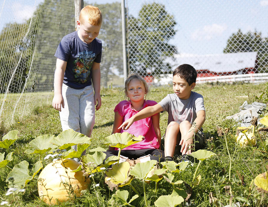 <p>BRITTANY WENTZELL PHOTO</p><p>Logan, Kera, and Jeremy check out some pumpkins at Petite Riviere Elementary that they helped grow.</p>