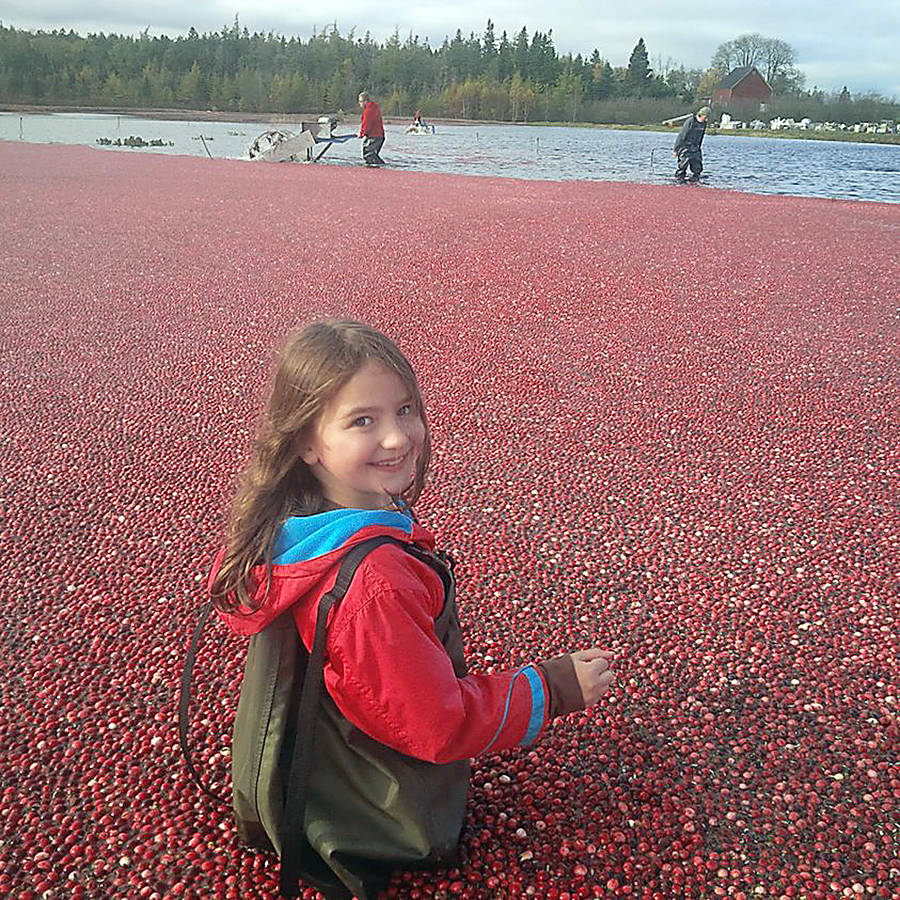 <p>CONTRIBUTED PHOTO</p><p>All in the family — young Ella Ernst helps out in the Terra Beata cranberry bog.</p>