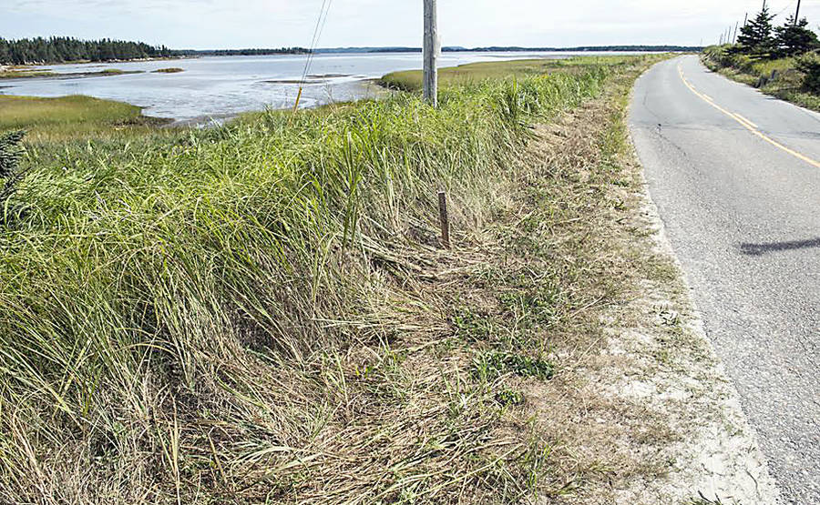 "<p>CONTRIBUTED PHOTO</p><p>TIR has begun brush clearing along the Crescent Beach causeway, ""to reestablish site lines,"" according to the project engineer, Christina Yeadon.</p>"